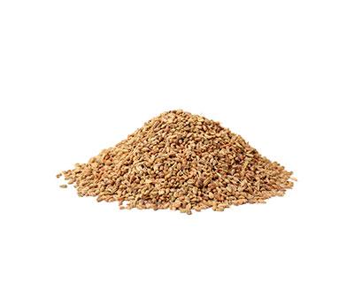 carum ajowan seeds